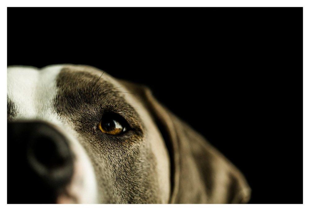 Pet_Photographer_Portland_Oregon_0007.jpg