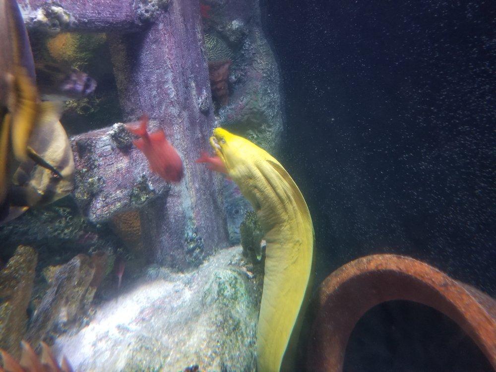 Oh no! A Sea Serpent!