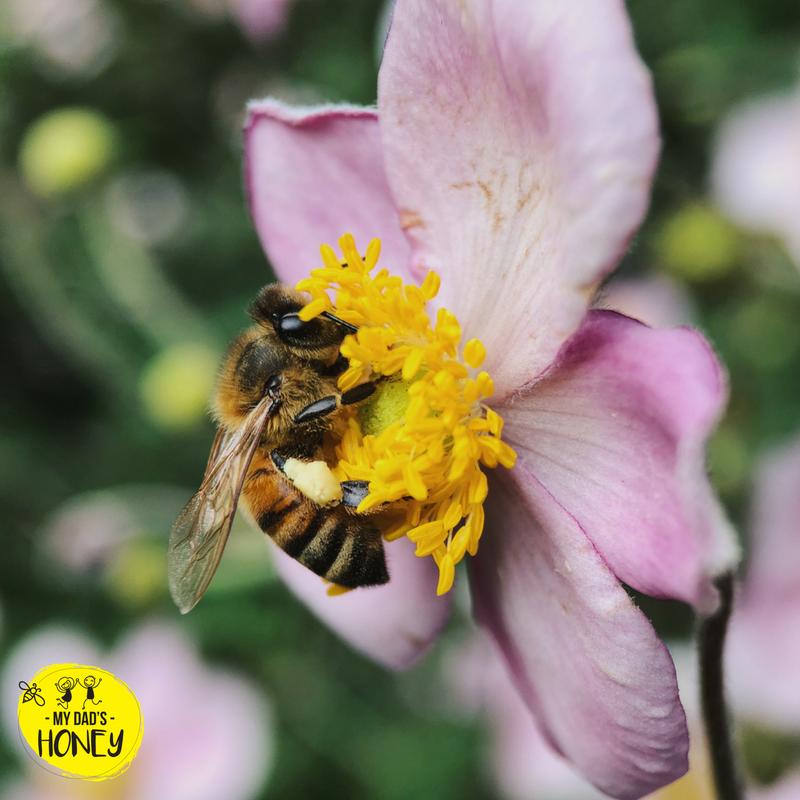 Attract Bees in Garden - My Dad's Honey blog