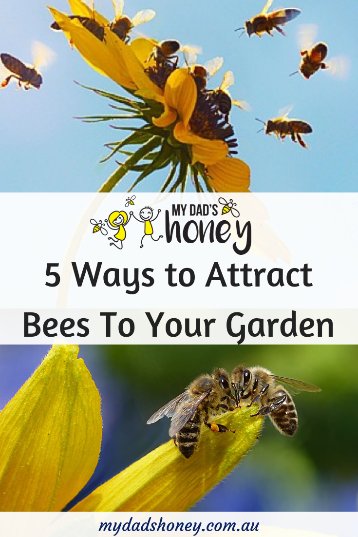 5 Ways To Attract Bees To Your Garden - My Dad's Honey Blog.png