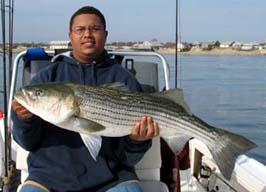 Nice Bass caught, light tackle Narragansett Bay