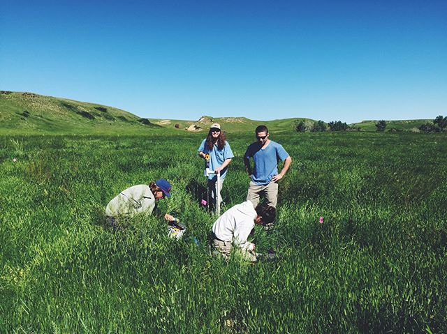 Our WY/MT field crew has been hard at work this week sampling their first ranch along the Wyoming-Montana border!