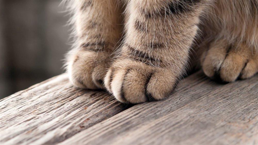 cat-paws-feet-kitten.jpeg