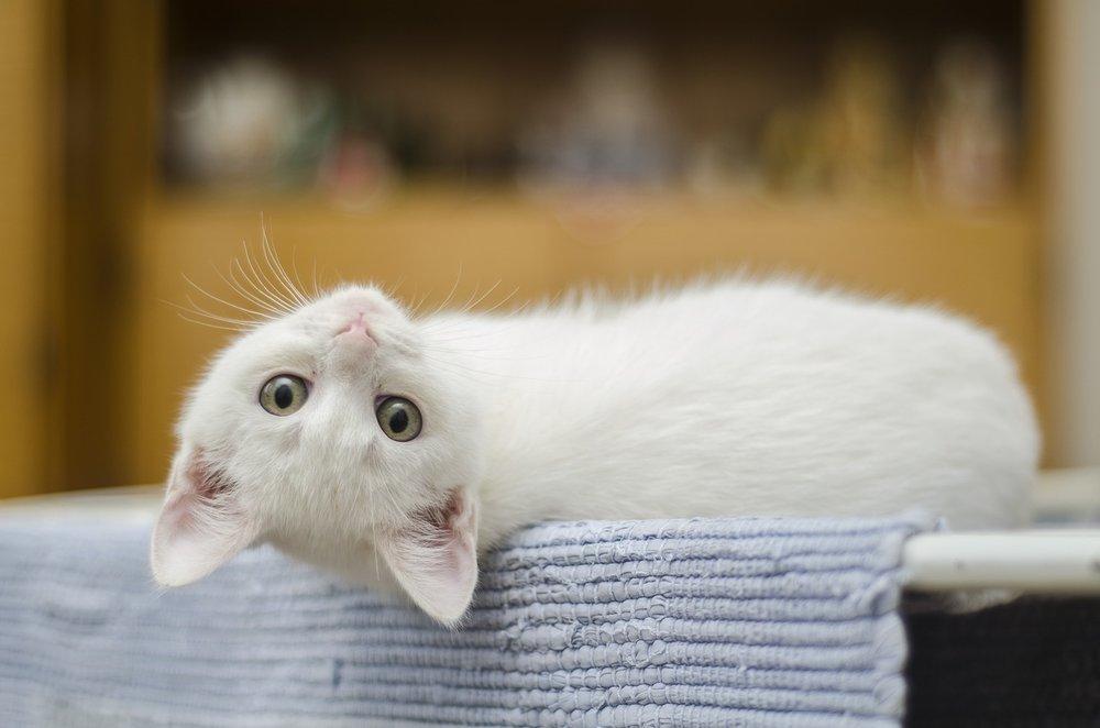 cat on his back.jpg