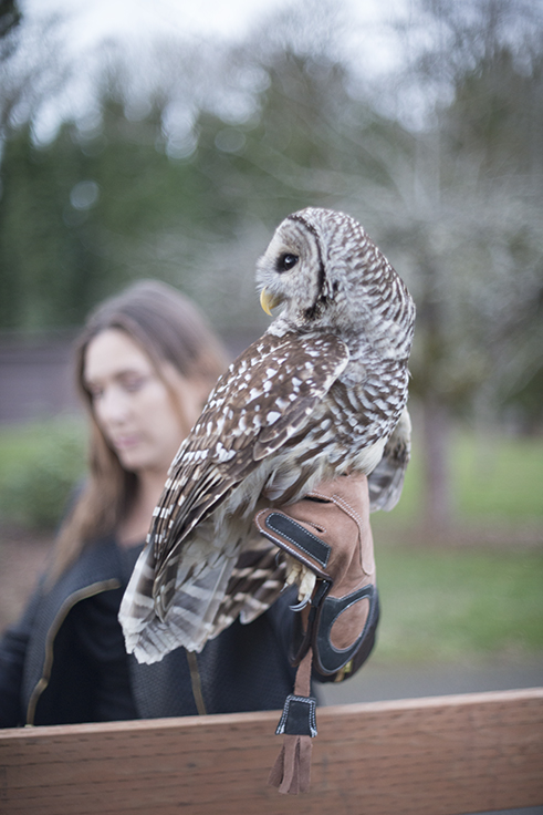 Alina Blankenship with the Owl we have named HOOT... Going Home!