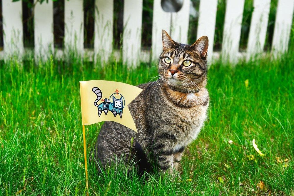cat-1979438_1280 FREE PIXABAY.jpg