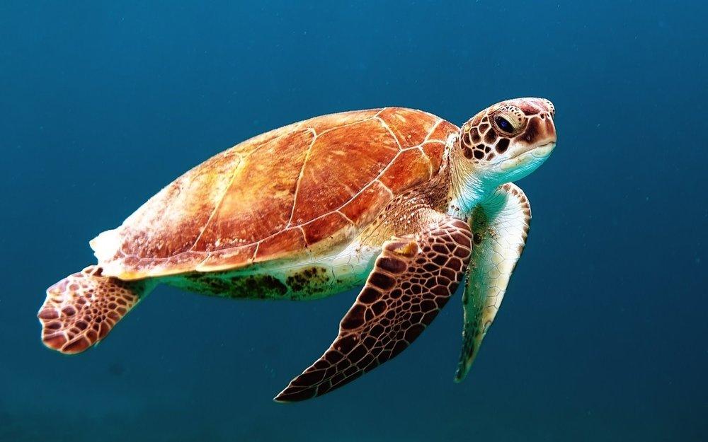 turtle-863336_1280PIXABAY.jpg