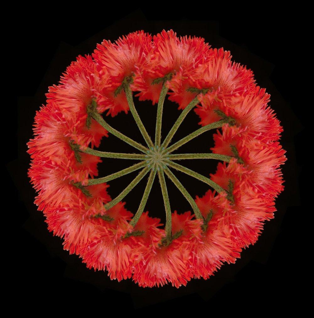 www.iaincrockart.com_flora--2.jpg