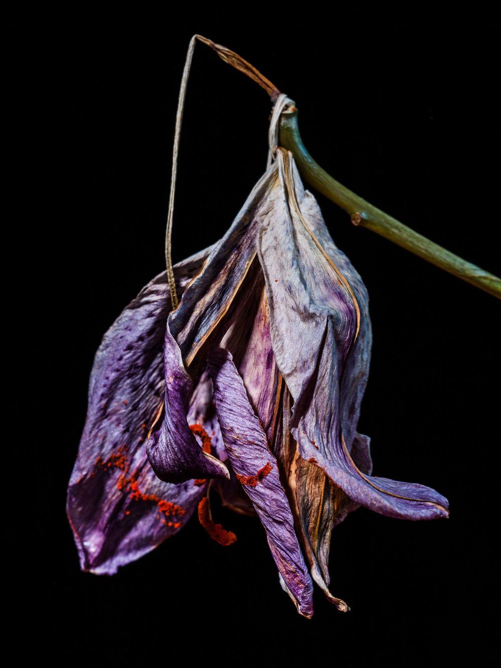 www.iaincrockart.com_flora-006999.jpg