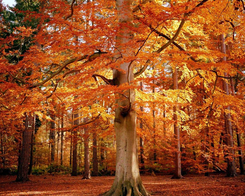 www.iaincrockart.com_landscape-6_6-2.jpg