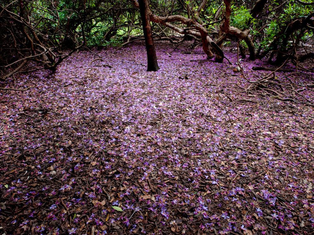 www.iaincrockart.com_landscape-CF005522-2.jpg