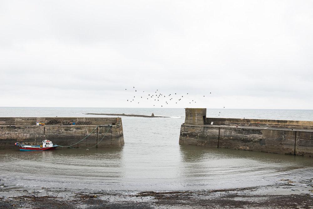 www.iaincrockart.com_observation-Iain Crockart - NORTHUMBERLAND-155.jpg