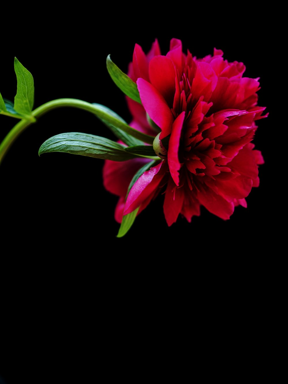 www.iaincrockart.com_flora-006901.jpg