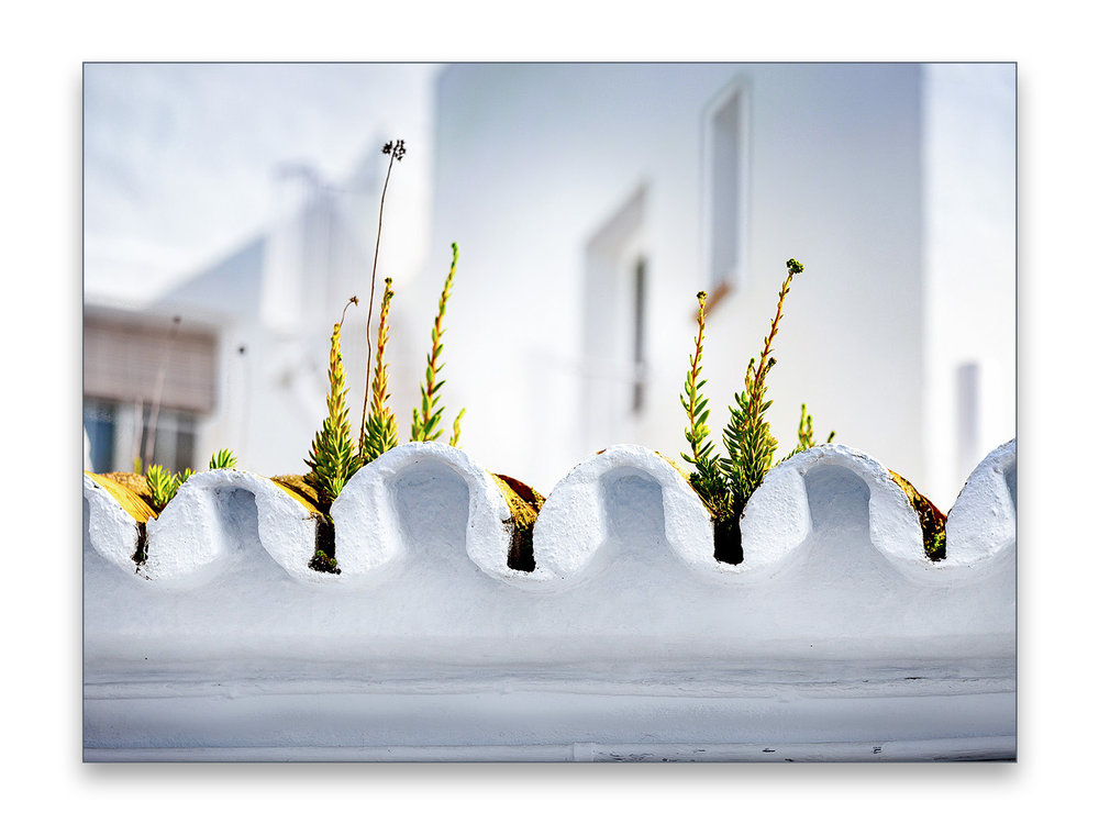 Roof Plants - 40 x 30 cm € 65,-60 x 34 cm € 85,-90 x 51 cm, € 155,-Limited edition of 108 of 10 available