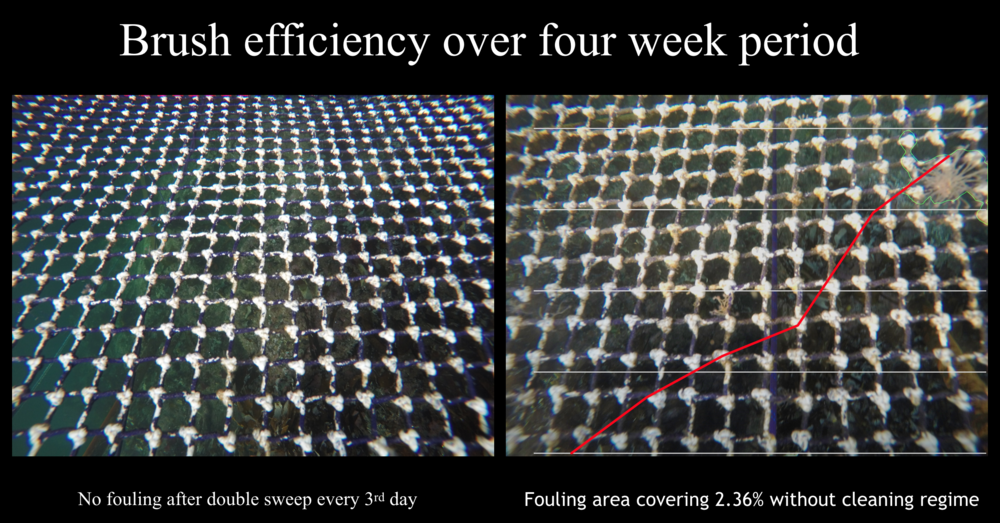 Here is how well it works. In test with rolling brushes the growth was kept away over the 4 week period with a simple brush stroke every 3rd day. Without any cleaning the growth was visible after two weeks, and increasing exponentially over time. Continuous and careful cleaning is working and producing virtually no debris in the pen.
