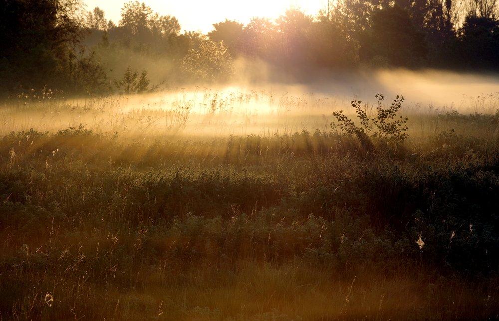 the-fog-2358045.jpg