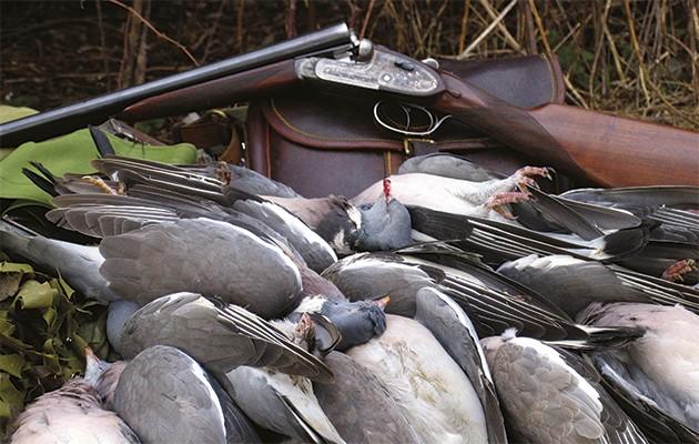 Pigeon-shooting-in-the-UK-630x400.jpg