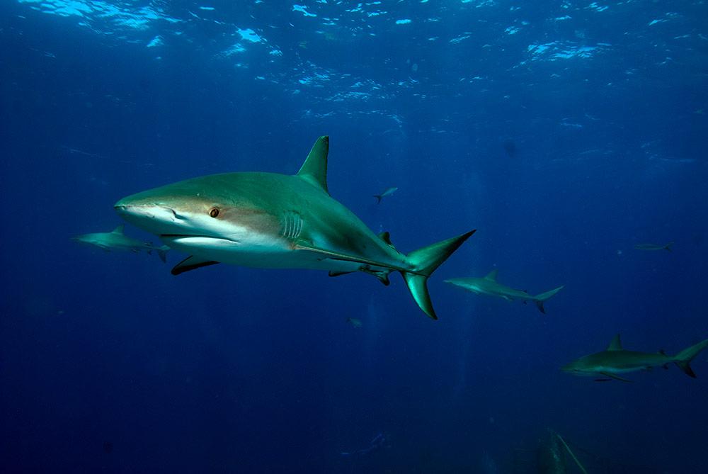sharks-Murph-Bhms--05sLOW.jpg