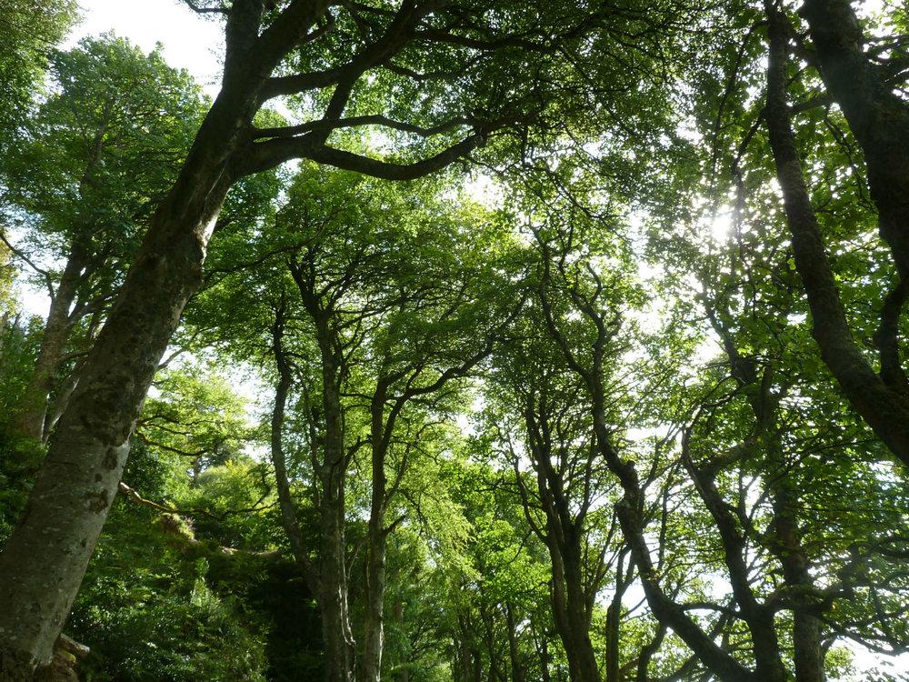 oban-trees-near-dunolie-8-1.jpg