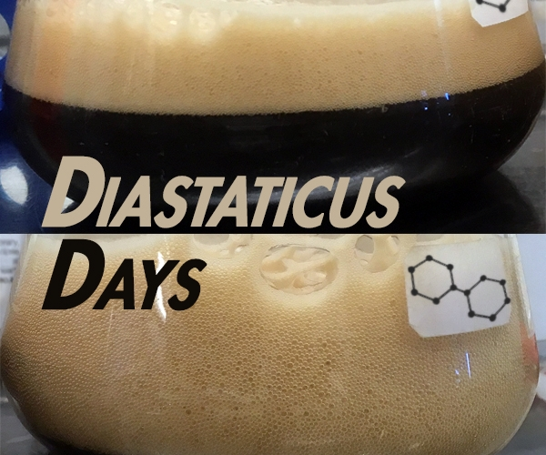 Diastaticus foamy flasks 2.jpg