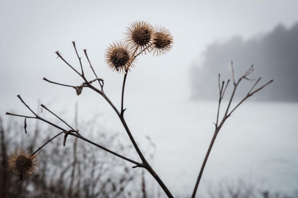 20180211-TC-Personal-North_Park_fog-005.jpg