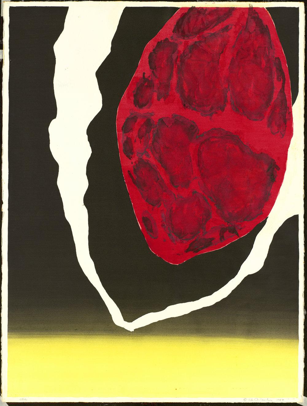 Cells: C-11 Study #2, 1987