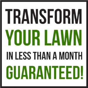 transform your lawn.png
