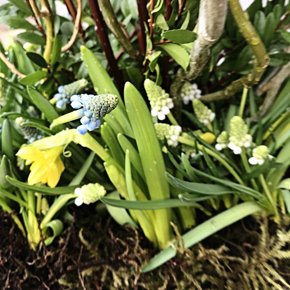 spring pot close up.jpg