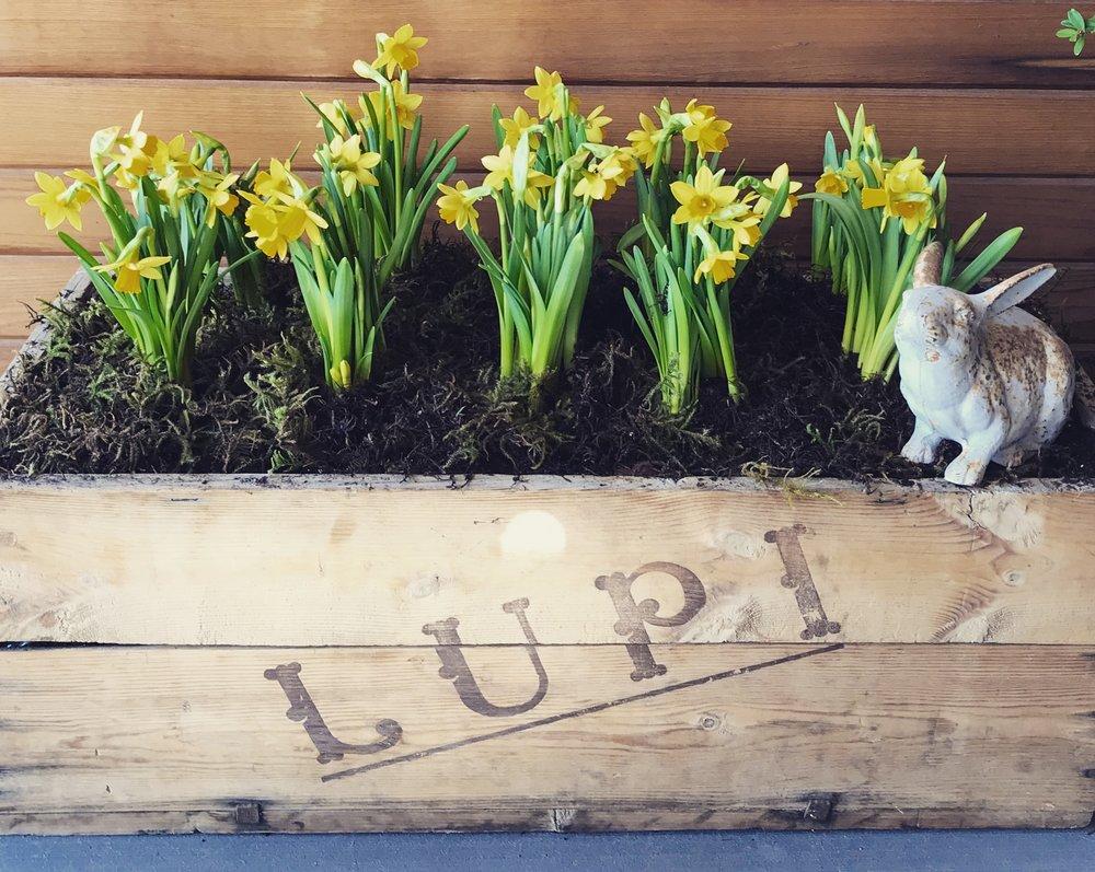 daffodil planter.JPG
