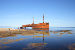 The  Ahern Trader  wreck on the shore of Gander Bay. Photo by Frankverro.