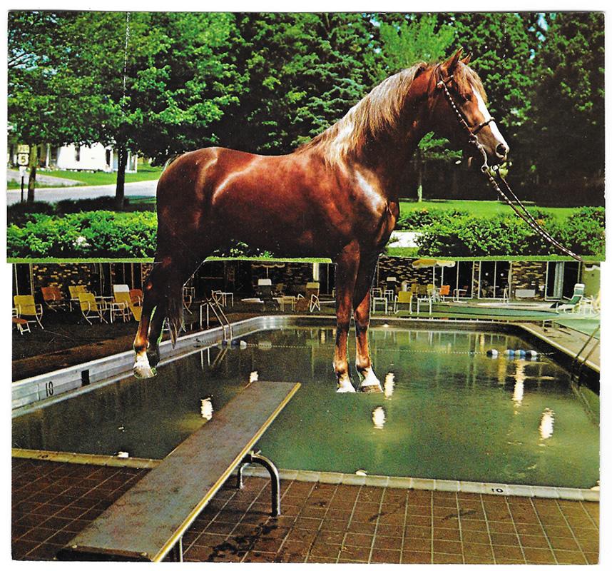 horsepool_conjoinedpostcard-bannerqueen.jpg