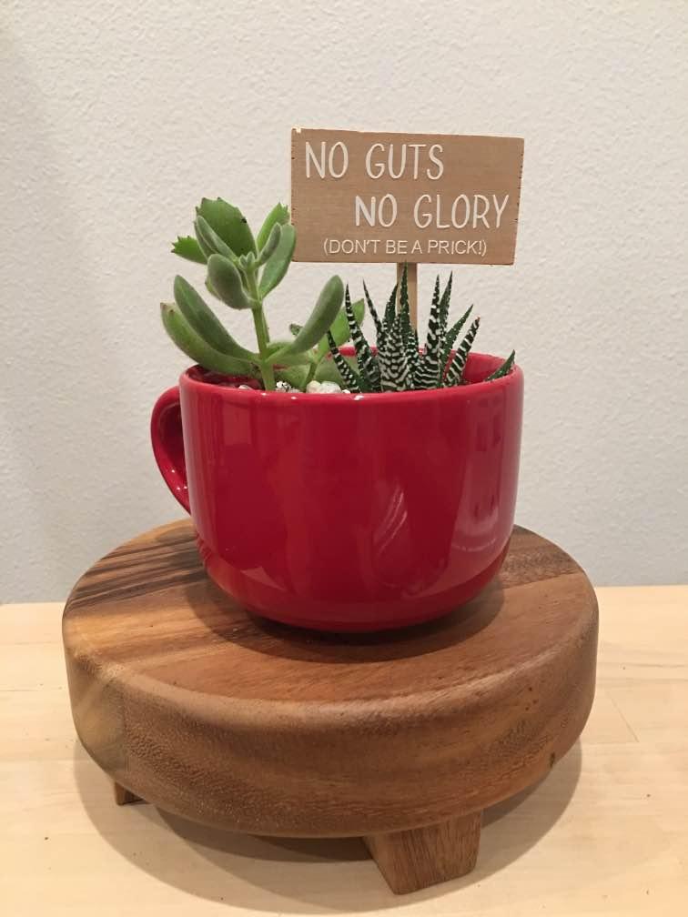 cup terrarium.jpg