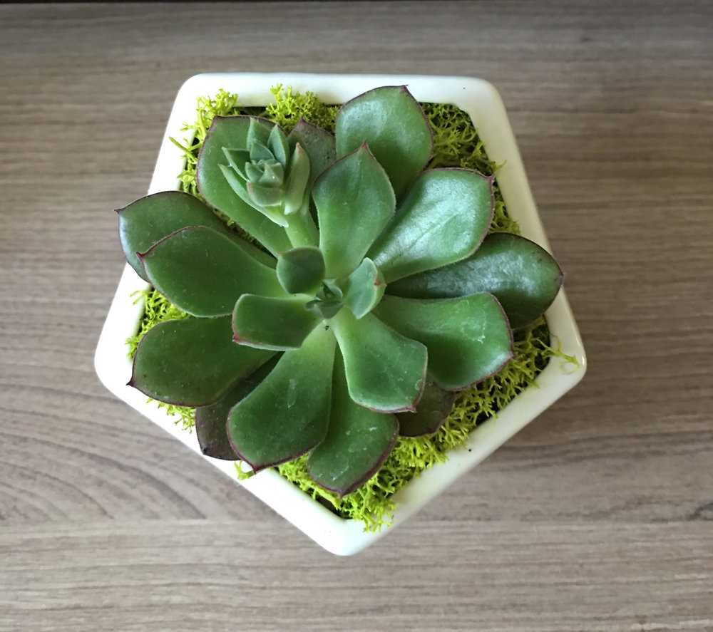sq white terrarium.jpg