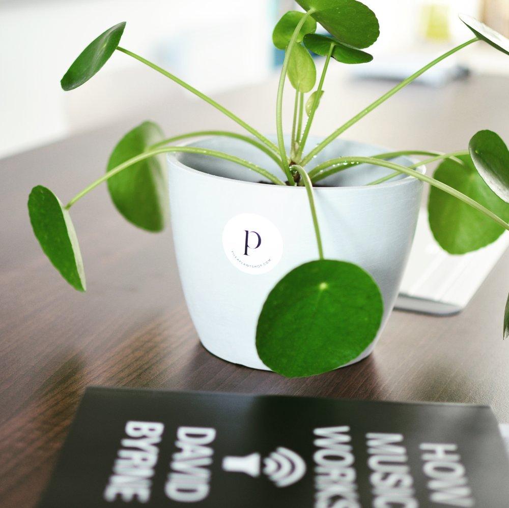 Pilea Plant Shop Office Houseplant Consultation.JPG