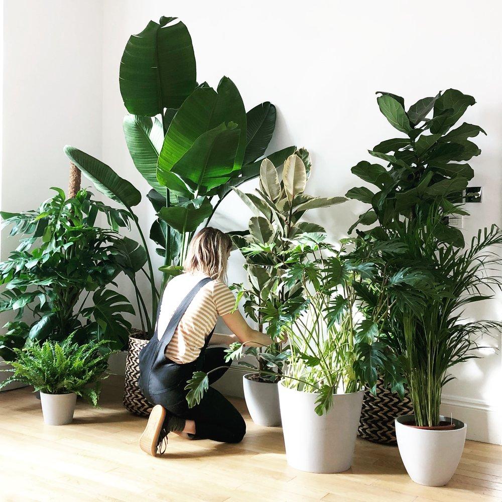 Pilea Plant Shop Home Houseplant Consultation.JPG