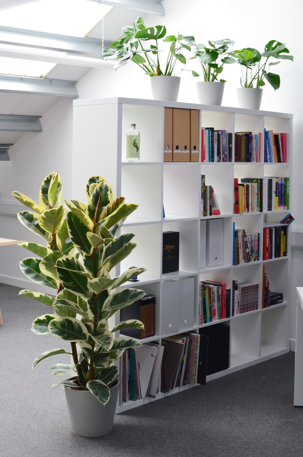 Pilea Plant Shop Houseplant Office Installation 2.JPG
