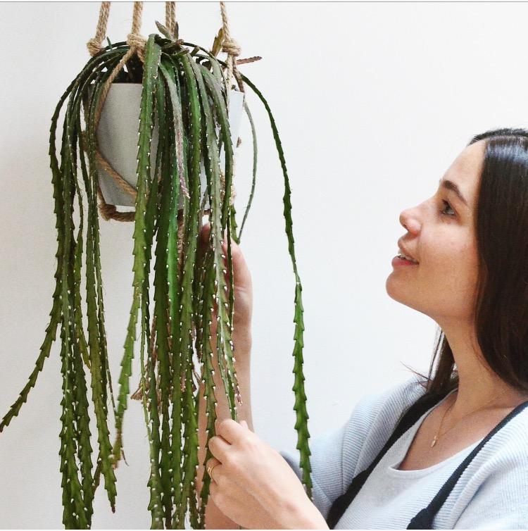 Pilea Plant Shop Holly Rhipsalis Installation.JPG