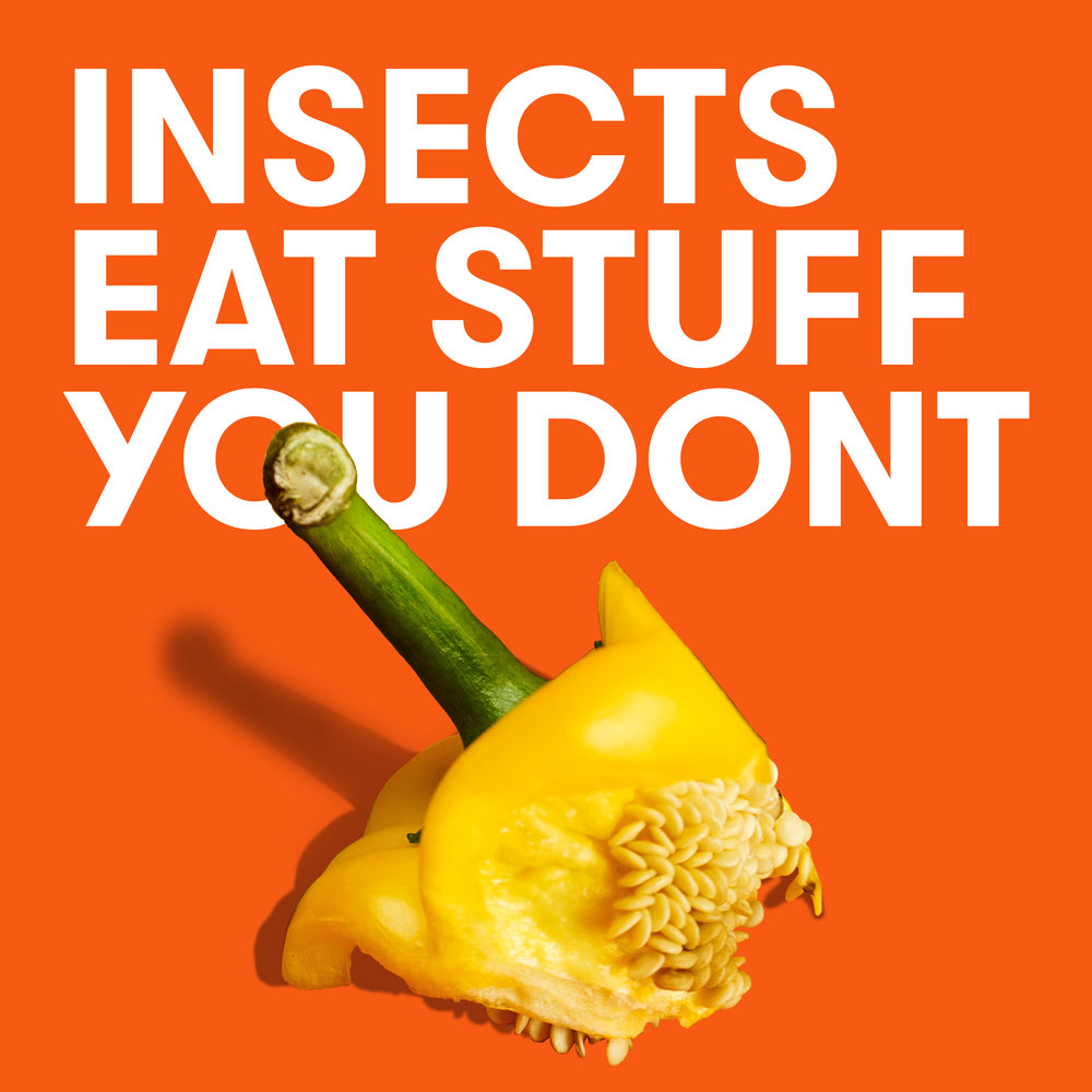 Unlike other livestock, insects eat the stuff you don't. They are very happy munching on organic waste that would otherwise be thrown away, helping to save the planet's precious resources.How considerate! 🐛 -