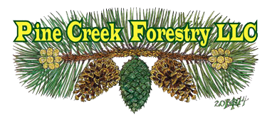 Pine Creek Forestry | Forestry Consultants | Conservation Managers | Forest Management | Conservation Specialists