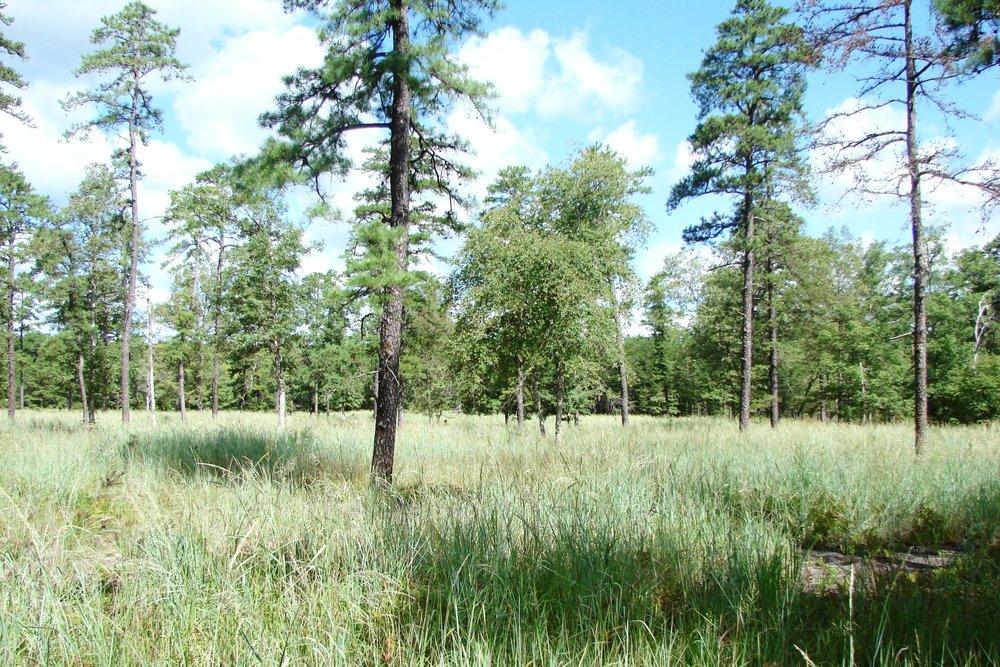 lenape savanna 042.jpg
