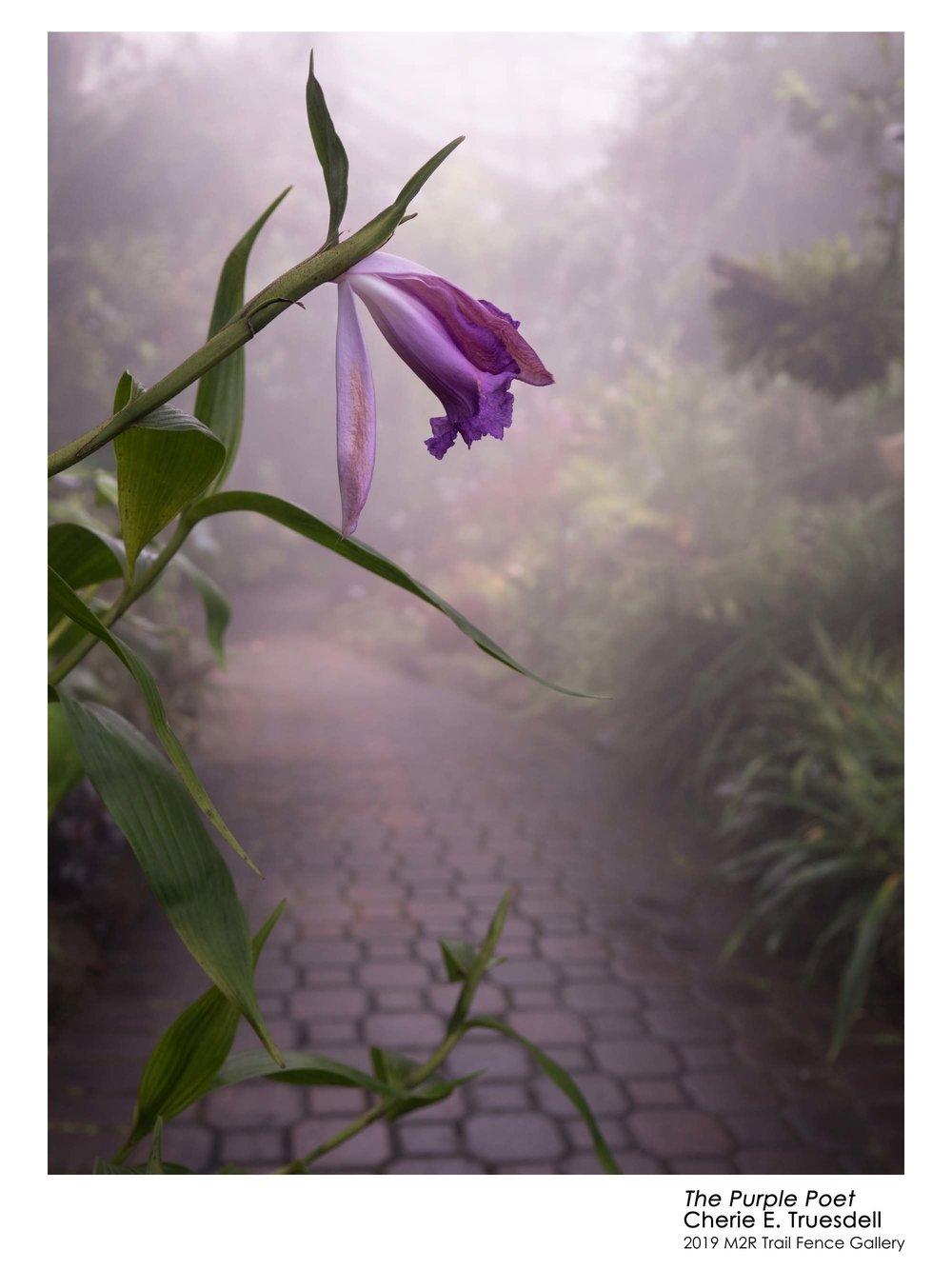 Cherie_Truesdell-The_Purple_Poet - cheriedvm.jpg
