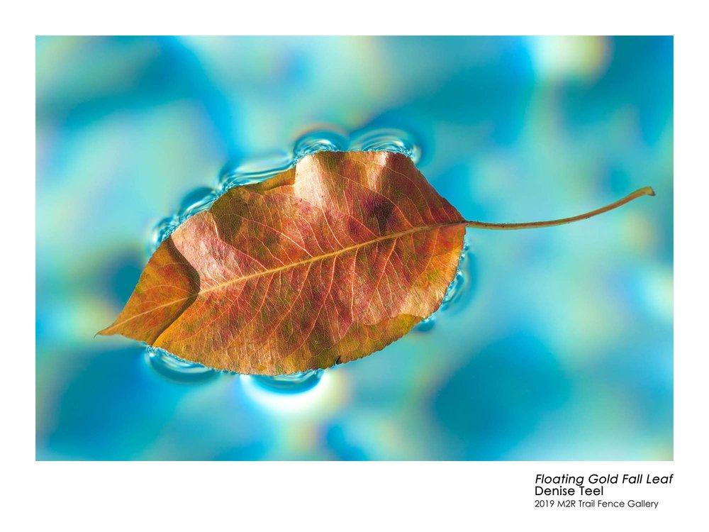 Denise_Teel_Floating Gold Fall Leaf.jpg