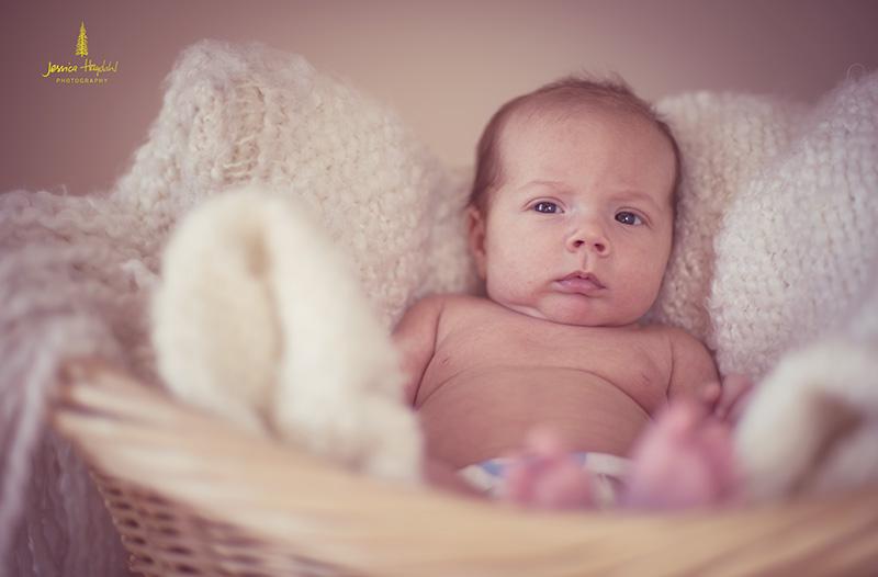 baby_6web