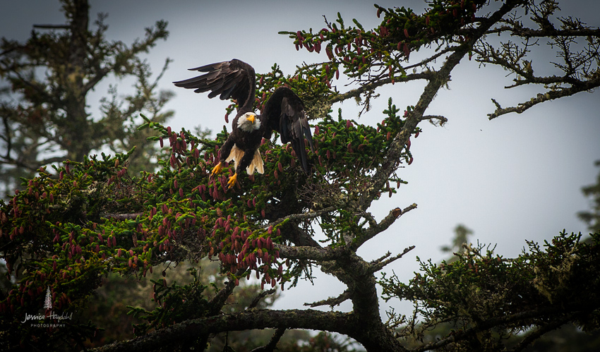 eagle_aug_2014_2web