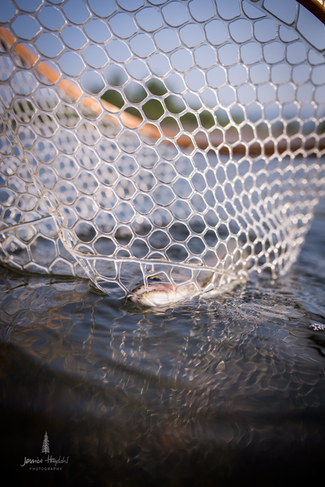 fly_fishing_clark_fork_2014_19web