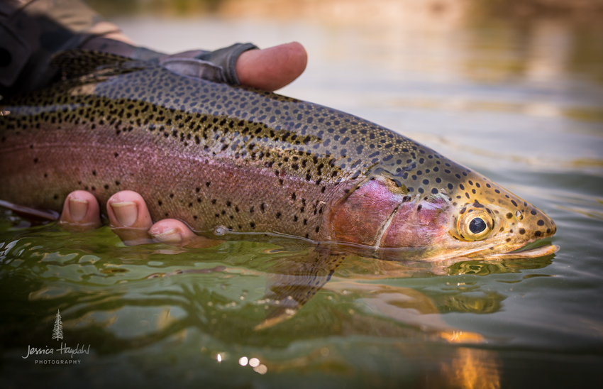 fly_fishing_clark_fork_2014_1web
