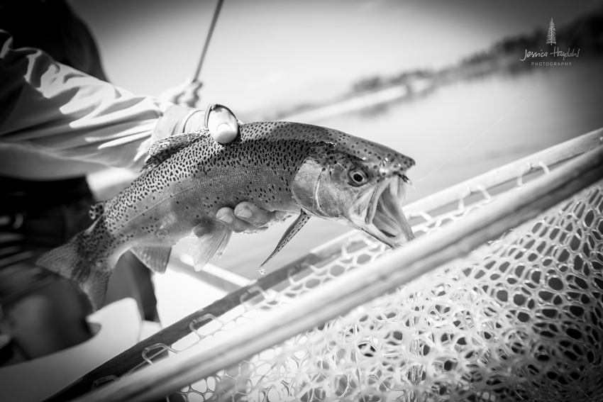 fly_fishing_clark_fork_2014_6web