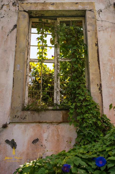 horta_2014_42web