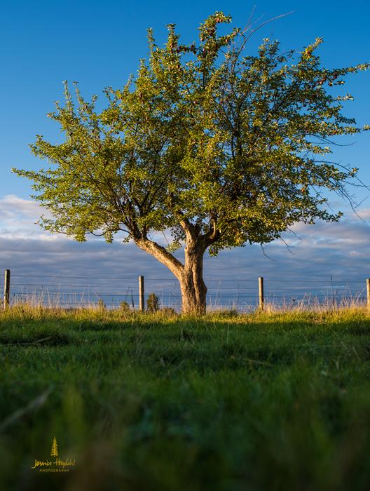 Pentax_tree_4web