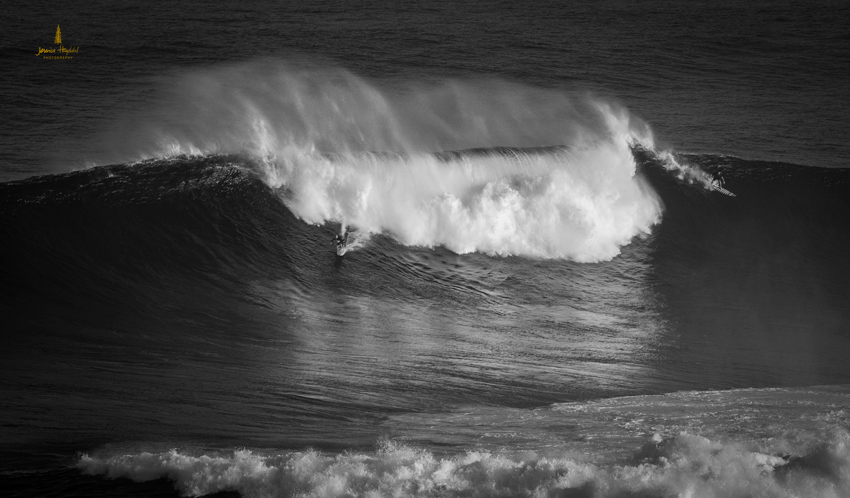 Jaws_2014_12web